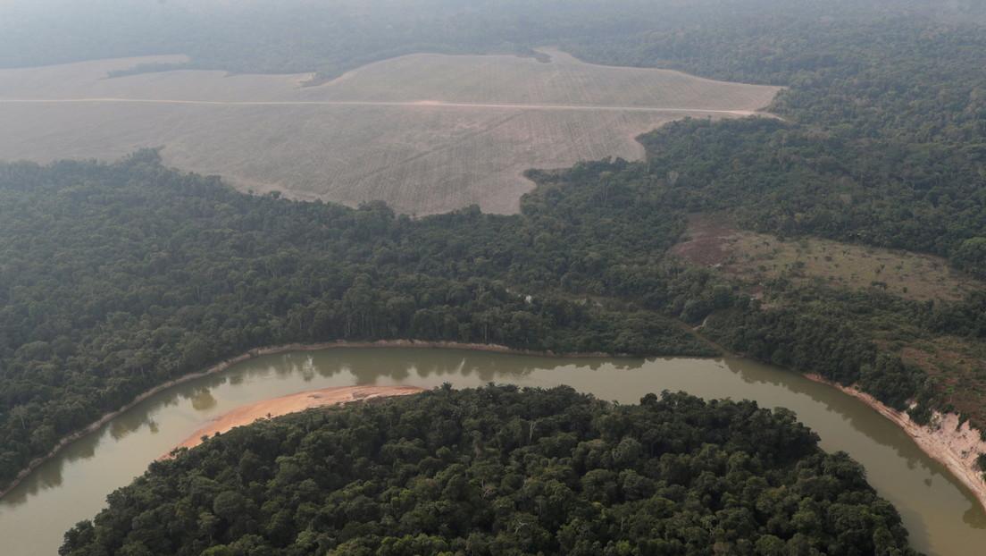 Un total de 10.476 kilómetros cuadrados destruidos: la deforestación en la Amazonía brasileña alcanza el nivel anual más alto en una década