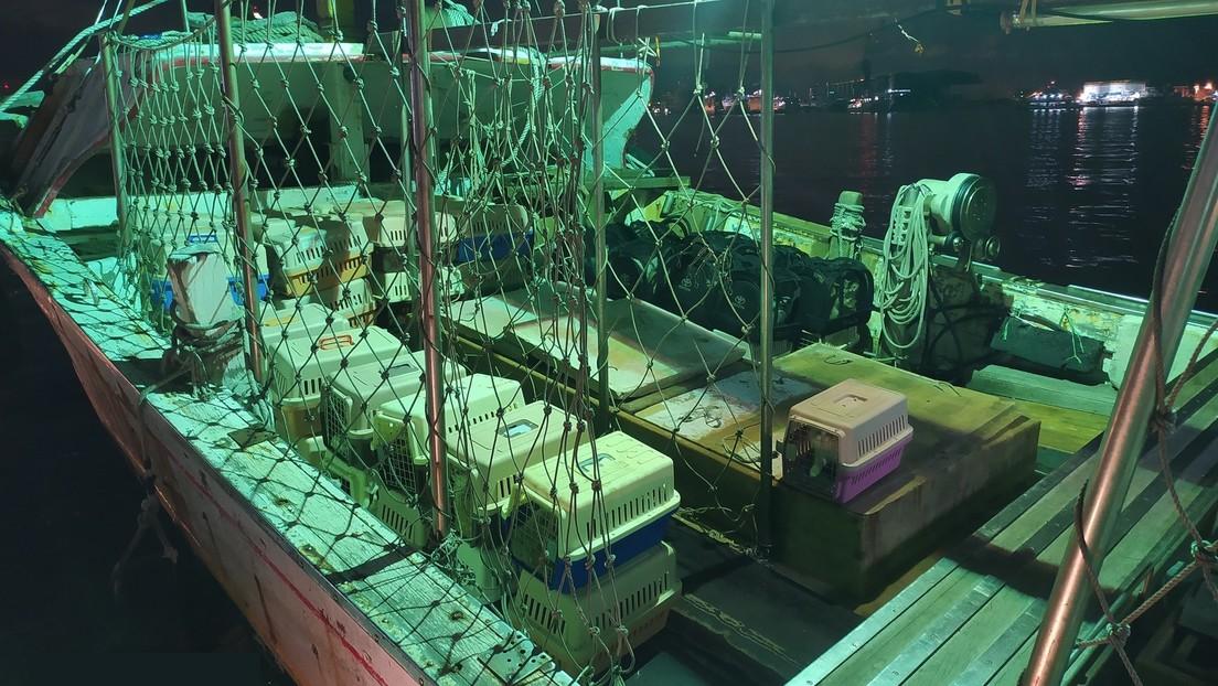 Autoridades taiwanesas sacrifican a 154 valiosos gatos de contrabando en el Día Internacional de Animales Sin Hogar provocando indignación