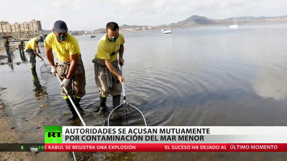 """La muerte masiva de peces en el Mar Menor, fruto de una agricultura """"irresponsable"""""""