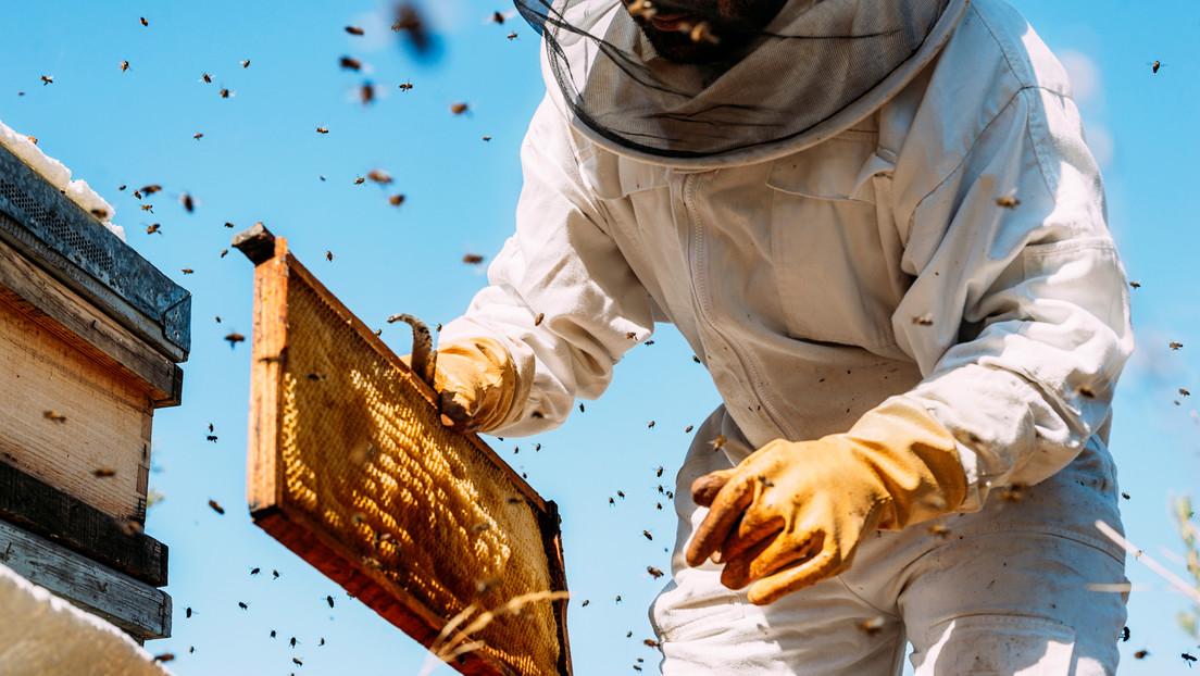 """Un """"cruel"""" incendio provocado en colmenas mata a más de un millón de abejas y deja """"devastado"""" a su propietario"""