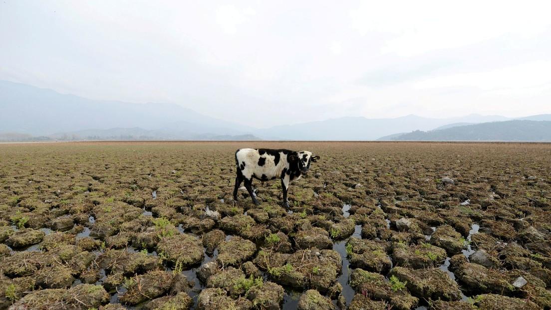 Una 'mancha caliente del sur' contribuye desde el océano Pacífico a la megasequía en Chile