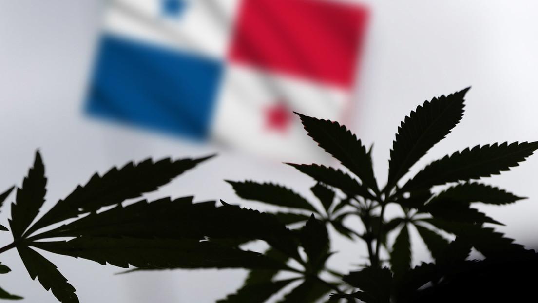 Panamá aprueba el uso medicinal del cannabis (y cómo está la legislación en otros países de América Latina)