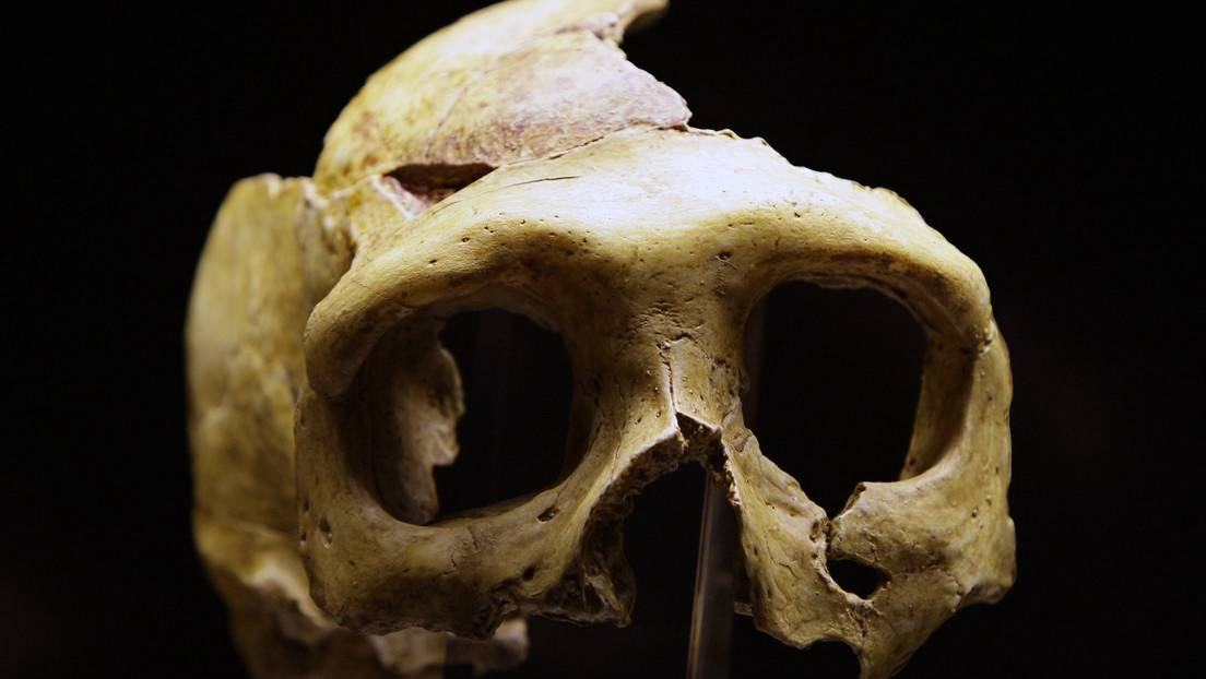 Réplica de un cráneo de neandertal en el Museo del Neandertal, en la ciudad de Krapina (Croacia), el 25 de febrero de 2010.