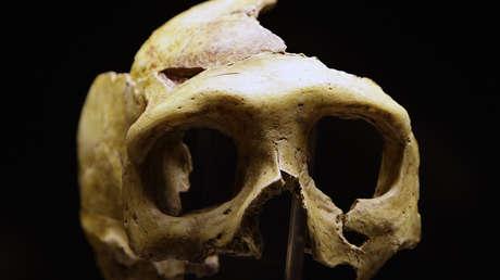 Científicos descubren que los neandertales tenían varios tipos de sangre al igual que los humanos modernos