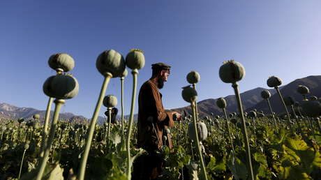 """Moscú: La lucha de EE.UU. contra el narcotráfico en Afganistán derivó en """"un proyecto para crear un laboratorio de drogas a escala mundial"""""""