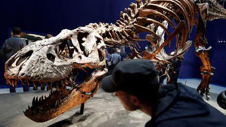 """""""Un depredador aún más temible de lo que se creía"""": descubren terminaciones nerviosas en la mandíbula de los 'T-rex' que la hacía sensible al tacto"""