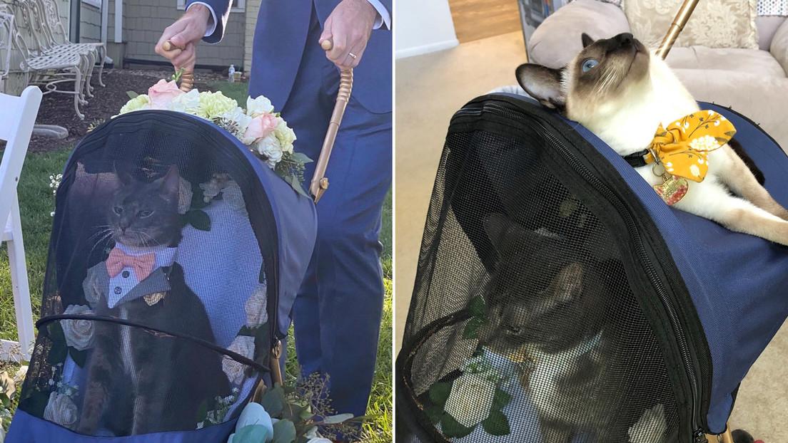 FOTO: Un gato oficia de 'padrino' en una boda y su aspecto elegante y solemne conquista a la Red