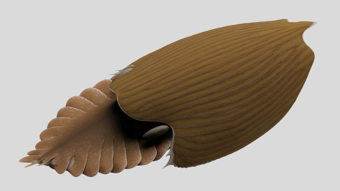 """Descubren el """"enorme"""" fósil de una nueva especie de """"gigante"""" marino que vivió hace más de 500.000 años"""