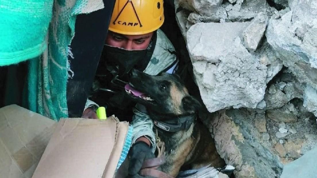 Perros de rescate apoyan en la búsqueda de varios desaparecidos tras el deslave en el cerro del Chiquihuite