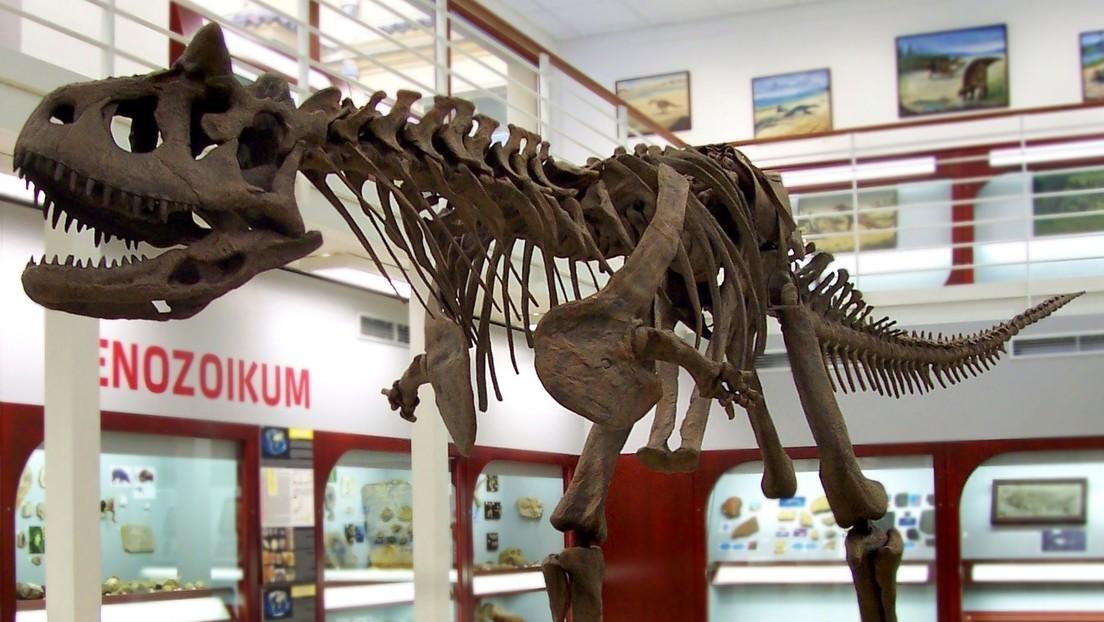 Científicos analizan la piel fosilizada de un dinosaurio y descubren que algunas partes tienen forma de diamante