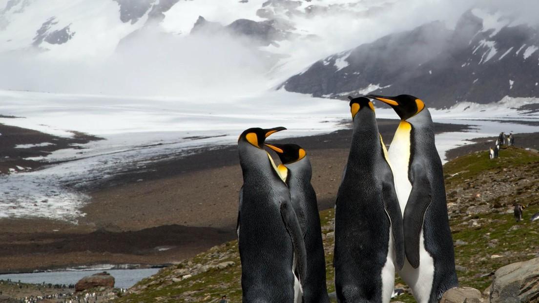 Catalogan una nueva especie de pingüinos antiguos descubiertos por escolares