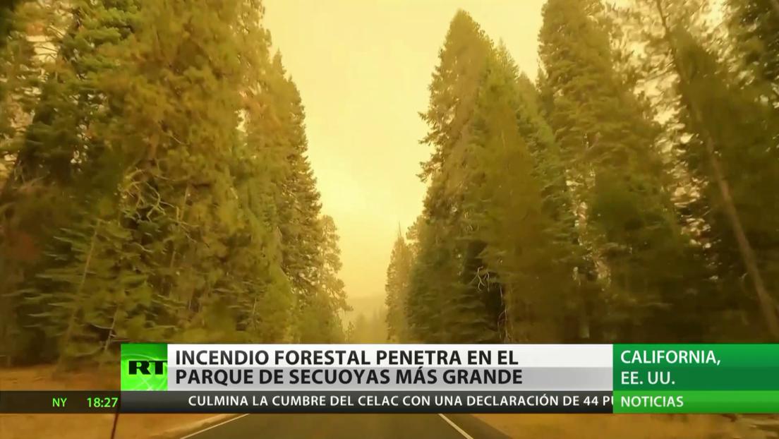 EE.UU.: Incendio forestal amenaza al parque de secuoyas más grande del mundo