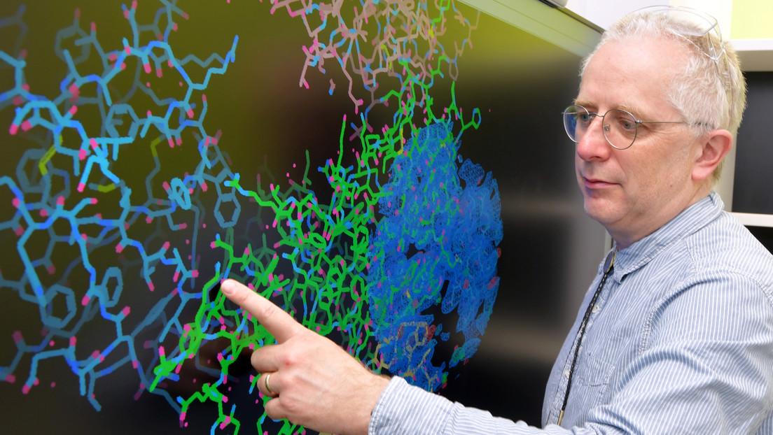 Científicos aíslan nanoanticuerpos de llamas que combaten el covid-19 y podrían administrarse en forma de aerosol nasal