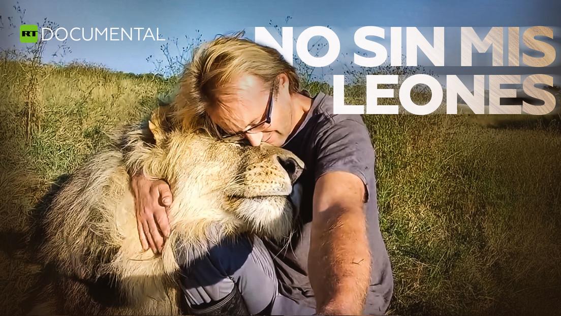 No sin mis leones