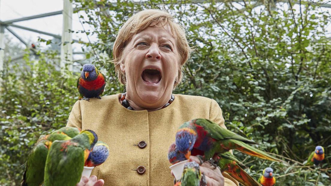 FOTOS: Angela Merkel visita un parque de aves y queda 'cercada' por bandadas de loros