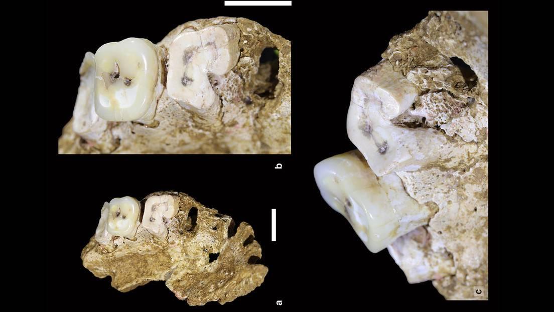 Detalles de una mandíbula de homo sapiens hallada en la isla de Célebes (Indonesia).