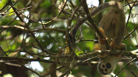 El país amazónico que puntea en el millonario negocio del tráfico ilegal de fauna silvestre