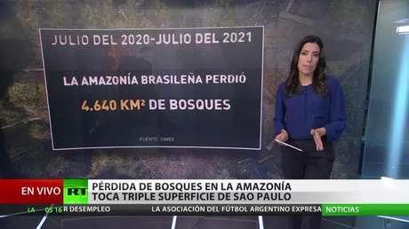 """Experto: """"El aumento de la deforestación de la Amazonía brasileña se debe a las políticas económicas de Bolsonaro"""""""