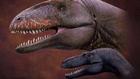 Encuentran en Asia Central los restos del dinosaurio que dominó el mundo antes que el 'Tyrannosaurus rex'
