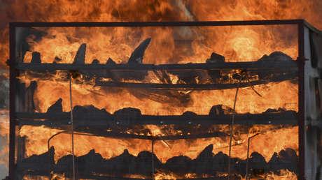 FOTO: Con ayuda de drones queman en la India casi 2.500 cuernos de rinoceronte para reafirmar que no tienen ningún valor curativo