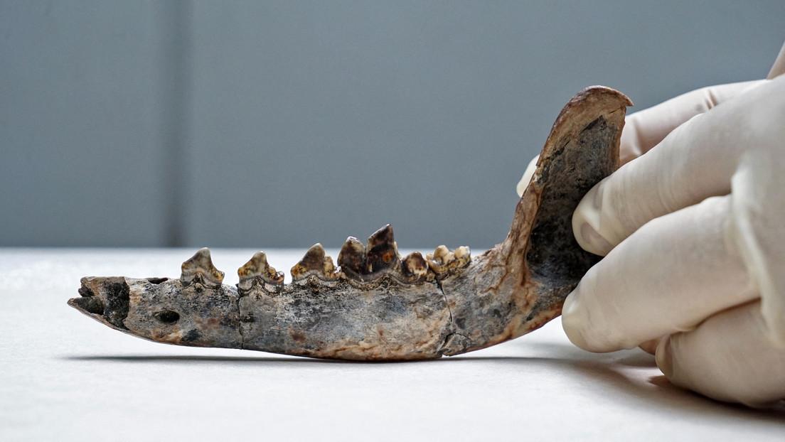 Un fósil sugiere que los perros vivían con humanos en Costa Rica hace 12.000 años