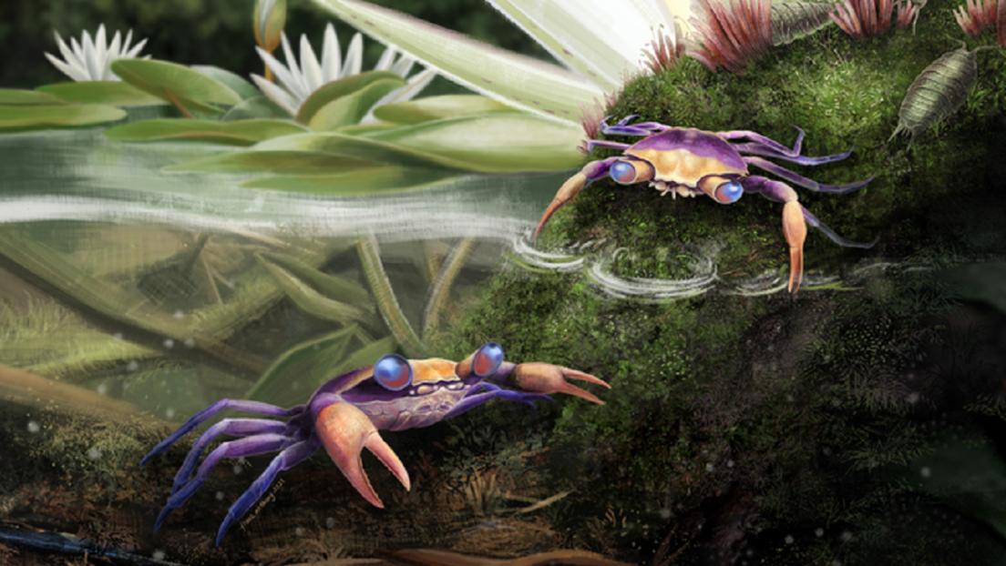 Descubren en un trozo de ámbar de 100 millones de años los restos de un cangrejo que conoció a los dinosaurios