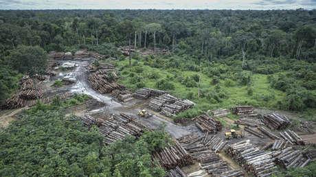 El cambio climático y la deforestación en la Amazonía pueden exponer a 12 millones de brasileños a un calor extremo en 2100