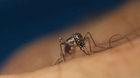 """Desarrollan un antiviral """"ultrapotente"""" capaz de tratar las cuatro variantes del virus responsable del dengue"""