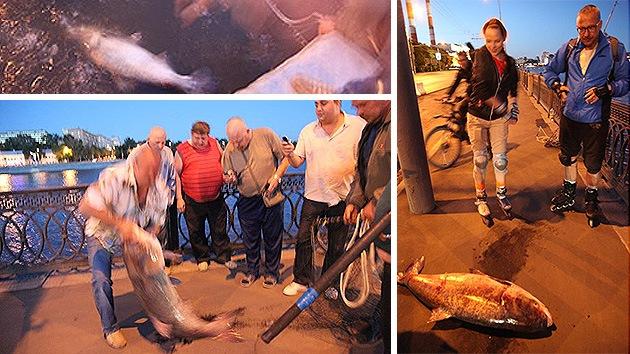 El río Moscova, infestado de 'monstruos'