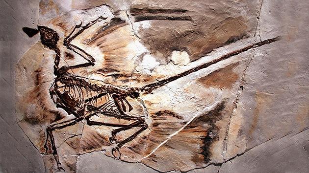 Los dinosaurios voladores usaban también las patas traseras como alas
