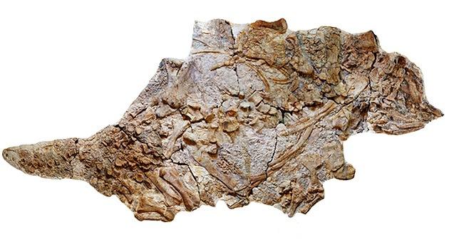Descubren en China fósiles de un nuevo dinosauro gigante blindado