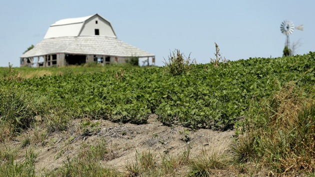 "La gran mentira del etanol: La alternativa verde de Obama ""lleva al desastre ecológico"""
