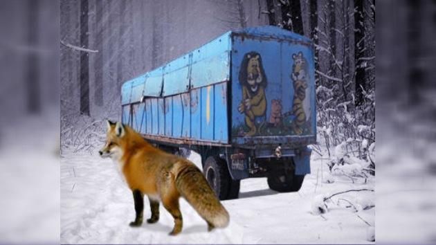 Policías rusos salvan animales dejados en pleno campo en la helada