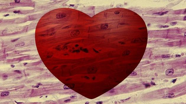Con células madre, logran rejuvenecer un corazón dañado