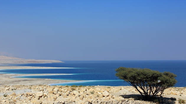 Científicos descubren un hongo en el mar Muerto que terminaría con el hambre mundial