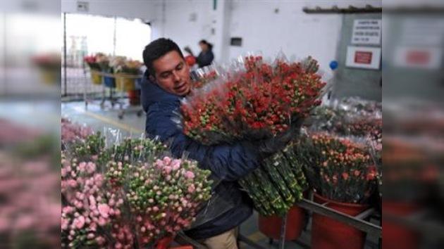 Las flores colombianas conquistan los mercados mundiales