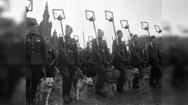 Soldados cuadrúpedos