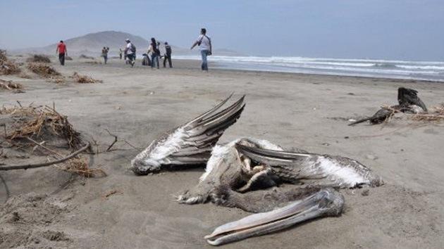 Calentamiento global: ¿motivo de muertes masivas de pelícanos y delfines en Perú?