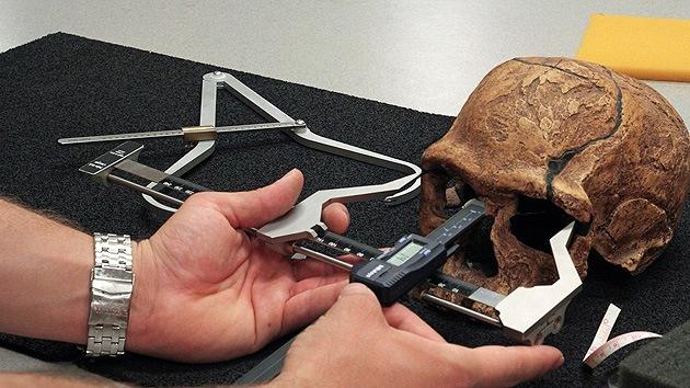 La caída de la testosterona hace 50.000 años cambió los cráneos e inició un brote cultural