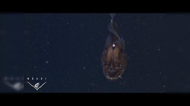 Inédita grabación del terrorífico 'diablo negro' del mar
