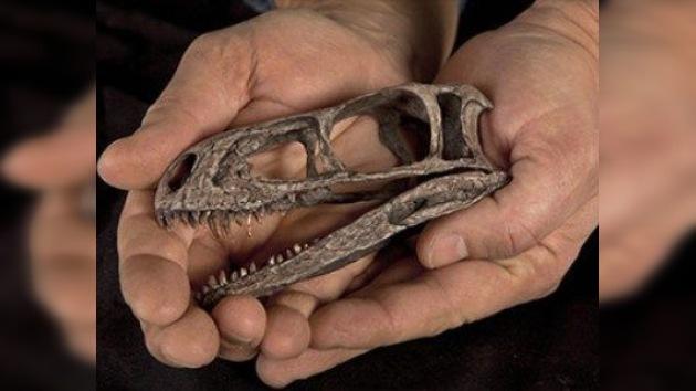 Reconstruyen el esqueleto del 'bisabuelo' de los dinosaurios carnívoros