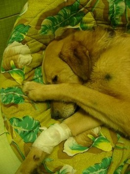 Un perro torturado que quiere volver a confiar en los humanos
