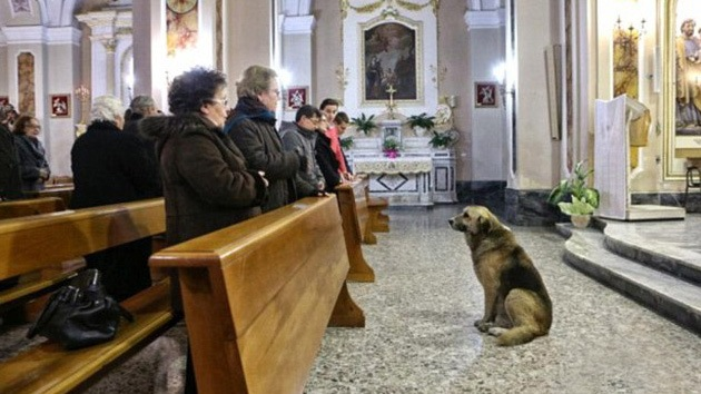 El perro más 'pastor': asiste a diario a la iglesia en busca de su dueña fallecida