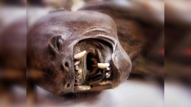 ¿Han matado al misterioso chupacabras en Texas?