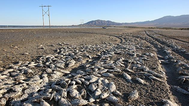 Fotos: El lago apocalíptico que amenaza a EE.UU. con una catástrofe ecológica