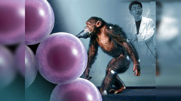 Los científicos japoneses curan a un primate paralizado con células madre