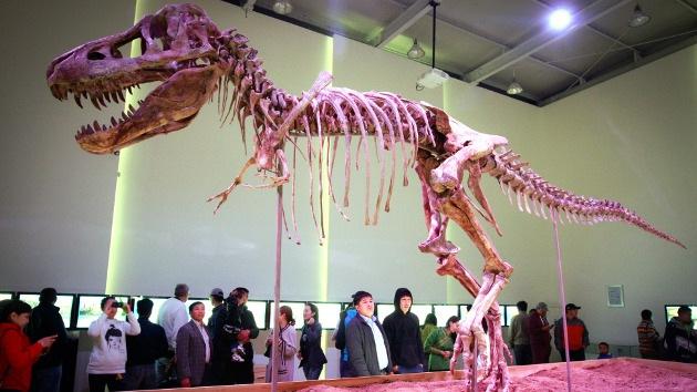 Encuentran la razón por la que los dinosaurios eran tan gigantes