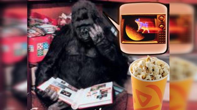Una televisión para un gorila deprimido en el zoo de Kiev