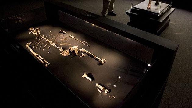 Australopithecus sediba, el 'humano' que se subía a los árboles: ¿El eslabón perdido?