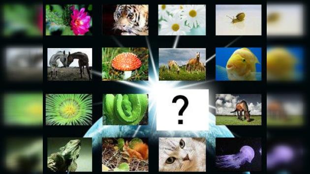 El 86% de las especies terrestres todavía no han sido descubiertas